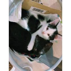 Futterspende für Kitten