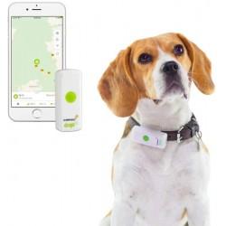 Weenect Dog GPS Tracker für...